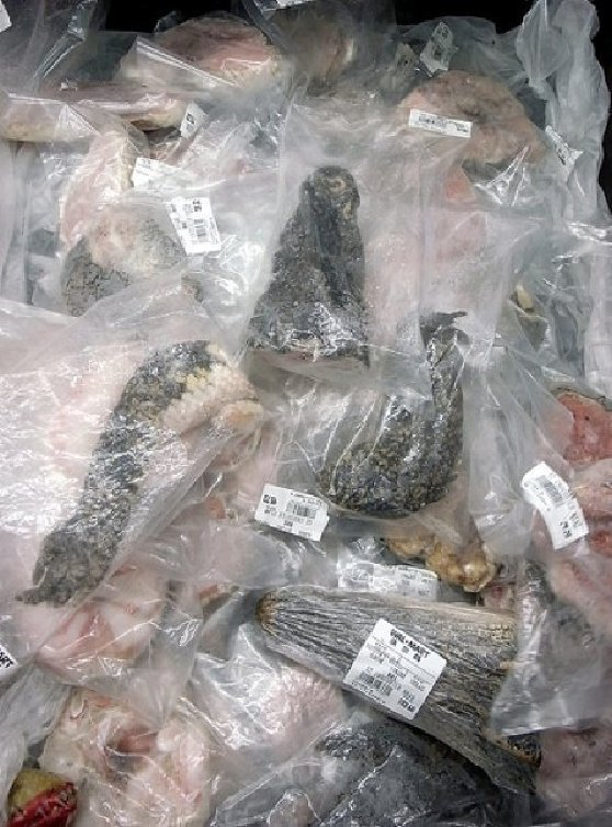 assorted dried reptiles