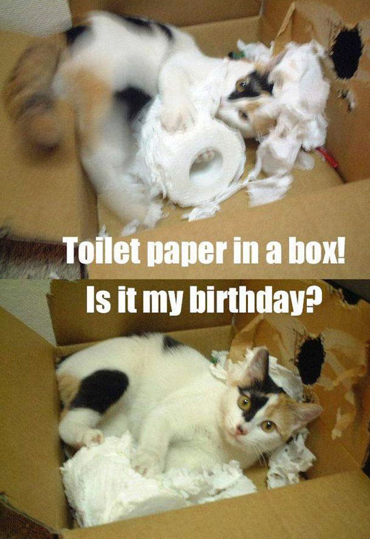 funny-toilet-paper-box-cat-play